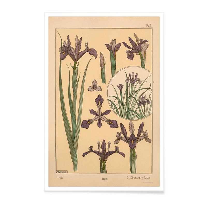Affiche, Eugène Grasset — Prune, Ponio